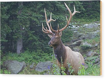 Wood Print featuring the photograph Elk 4 by Gary Lengyel