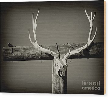 Elk And Blackbird Ranch Gate Wood Print by Gus McCrea
