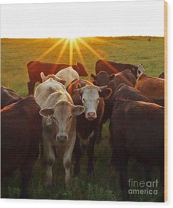 Elk County Herd Wood Print
