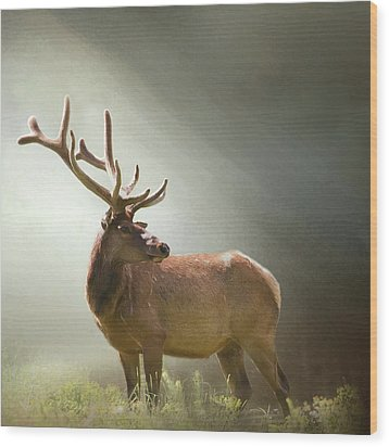 Wood Print featuring the photograph Elk In Suns Rays by David and Carol Kelly