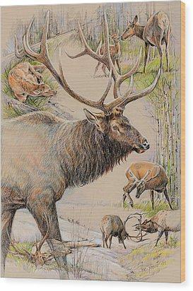 Elk Lifescape Wood Print by Steve Spencer