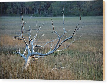 Elk-like Tree On Jekyll Island Wood Print by Bruce Gourley