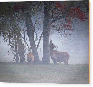 Elk Neck Scratch Wood Print