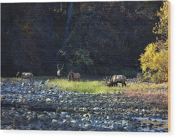 Wood Print featuring the photograph Elk River Crossing At Sunrise by Michael Dougherty
