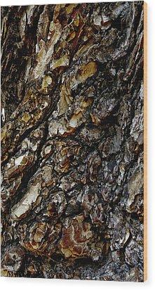 Elm Tree Bark Pattern Wood Print by Frank Tschakert