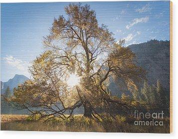 Elm Tree  Wood Print