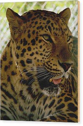 Elmira's Leopard Wood Print by Kimberly Camacho