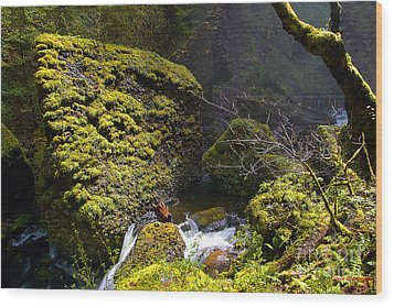 Elowah Falls Wood Print by Steve Warnstaff
