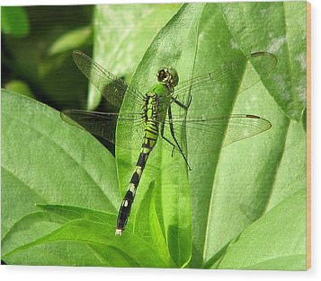 Wood Print featuring the photograph Emerald Dragonfly by David Dunham