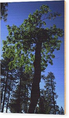 Emerald Oak Wood Print