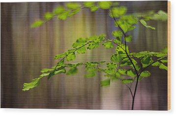 Wood Print featuring the photograph Emerald by Tim Nichols