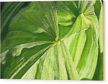 Emerging Plants Wood Print by Douglas Barnett