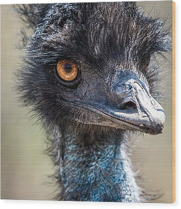 Emu Eyes Wood Print