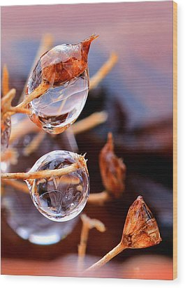 Encapsulated By Ice Wood Print by Christopher McKenzie