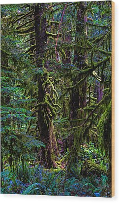 Enchanted Wood Print by Alana Thrower