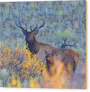 Enchanted Circle Elk Red River New Mexico Wood Print by Charles Frieda