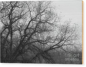 Wood Print featuring the photograph Enchanted Forest by Ana V Ramirez