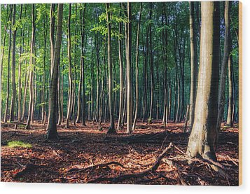 Wood Print featuring the photograph Enchanted Forest by Dmytro Korol
