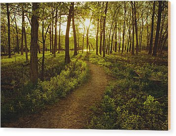 Enchanted Forest Wood Print by Jason Naudi Photography