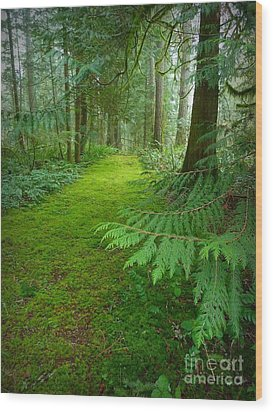 Enchanted Forest Wood Print by Patricia Strand