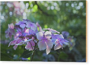 Wood Print featuring the photograph Enchanted Hydrangea by Theresa Tahara