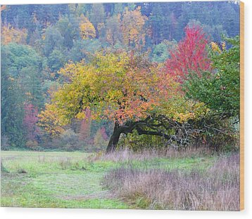 Enchanted Park Wood Print by Lori Seaman