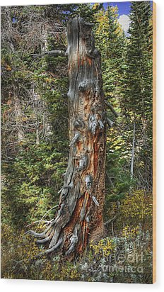 Enchanted Tree Wood Print by Pete Hellmann