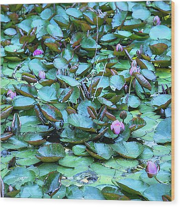 Wood Print featuring the photograph Painted Water Lilies by Theresa Tahara