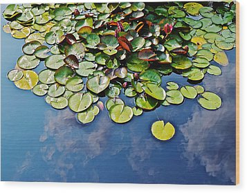 End Of July Water Lilies In The Clouds Wood Print