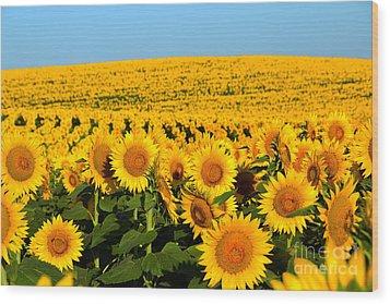 Endless Sunflowers Wood Print
