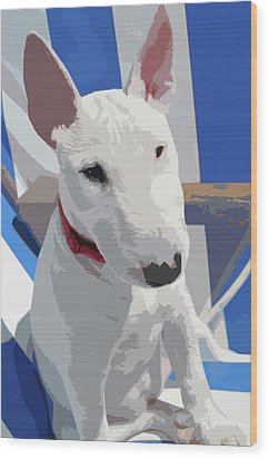 English Bull Terrier Wood Print