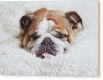 English Bulldog Sleeping In Fluffy White Blanket Wood Print by Hanneke Vollbehr