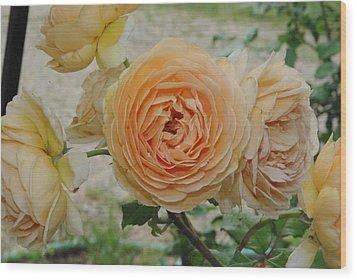 English Rose Apricot Crown Princess Margareta 2 Wood Print by Robyn Stacey