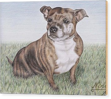 English Staffordshire Terrier Wood Print by Nicole Zeug