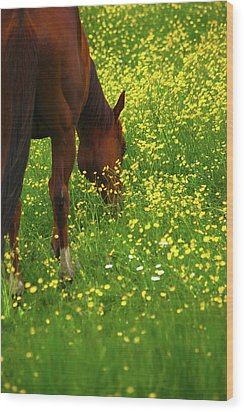 Wood Print featuring the photograph Enjoying The Wildflowers by Karol Livote