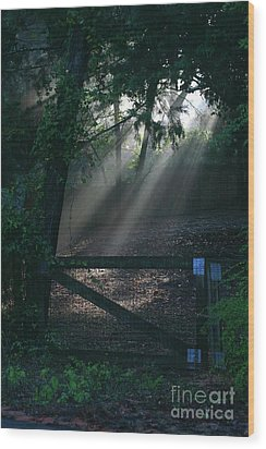 Wood Print featuring the photograph Enlighten by Lori Mellen-Pagliaro
