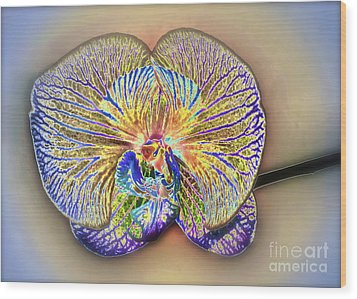 Enlightened Orchid Wood Print by Gwyn Newcombe