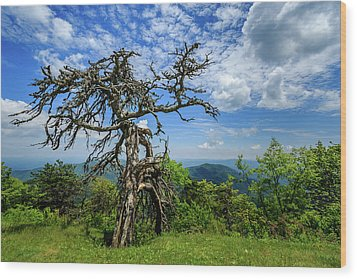 Ent At The Top Of The Hill - Color Wood Print by Joni Eskridge