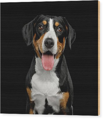 Entlebucher Sennenhund Wood Print