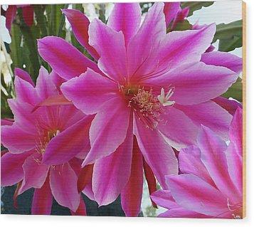 Epiphyllum Wood Print by Ellen Henneke