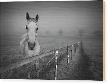 Equine Fog Wood Print by Taken with passion
