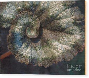 Escargot Begonia Wood Print
