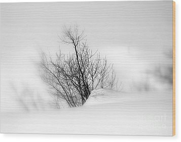 Wood Print featuring the photograph Essence Of Winter by Elfriede Fulda