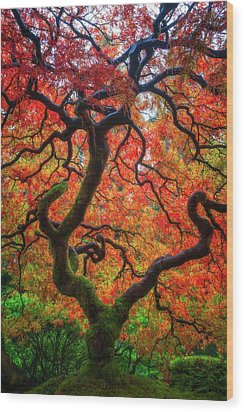 Wood Print featuring the photograph Ethereal Tree Alive by Darren White