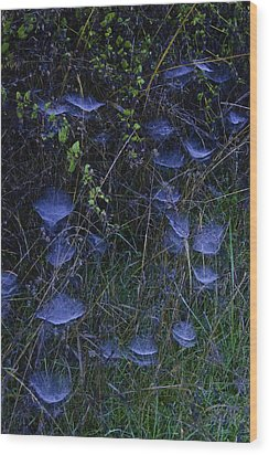 Wood Print featuring the photograph Ethereal Webs by Sherri Meyer