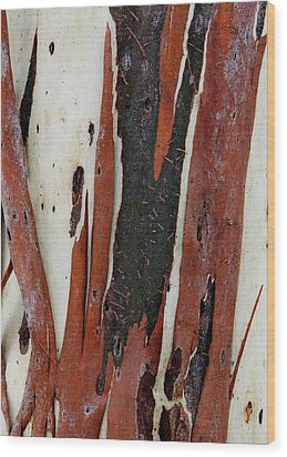 Eucalyptus Bark Abstract 2 Wood Print