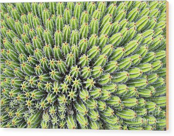 Euphorbia Wood Print by Delphimages Photo Creations