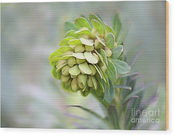 Wood Print featuring the photograph Euphorbia by Linda Lees