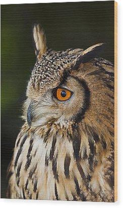 Eurasian Eagle-owl Bubo Bubo Wood Print