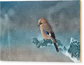 Eurasian Jay Wood Print by Ericamaxine Price